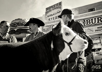 2013-01 National Western Stock Show